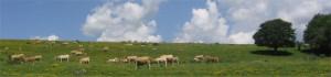 aubrac-landschaft